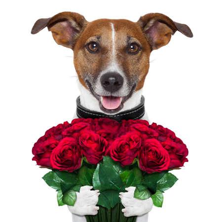 valentijn hond met een boeket van rode rozen