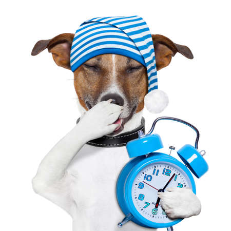 siesta: sleepyhead dog tired with clock and funny nightcap
