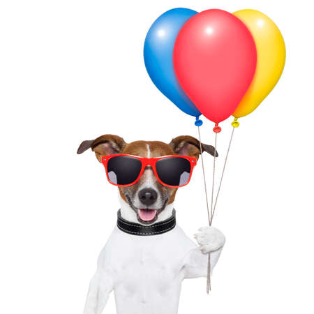 dog  with bunch  of balloons and cotton candy and shades photo