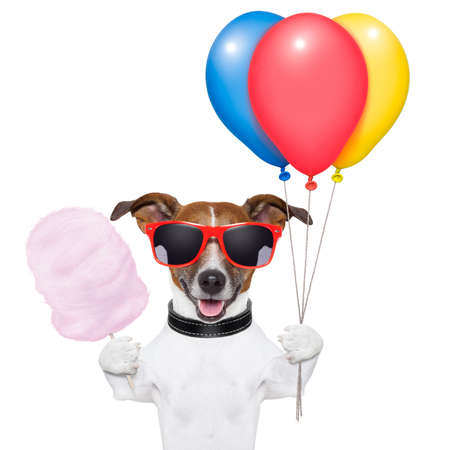colourful candy: dog  with bunch  of balloons and cotton candy and shades Stock Photo