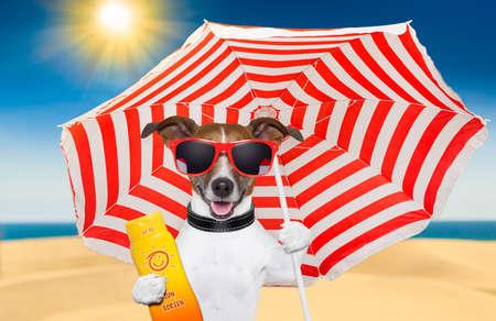 hond op het strand onder rode en witte paraplu met zonnebrandcrème Stockfoto