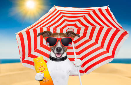 dog at the beach under red and white umbrella with sunscreen
