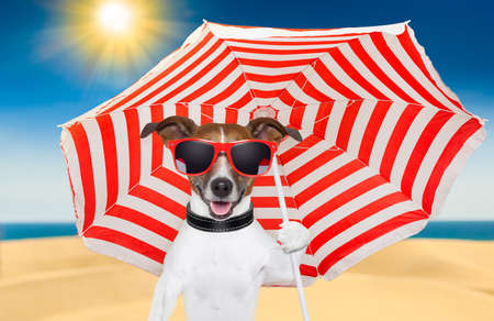 dog at the beach under red and white umbrella photo