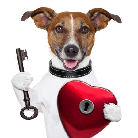 animal lover: valentine dog ,unlock my heart with a key Stock Photo