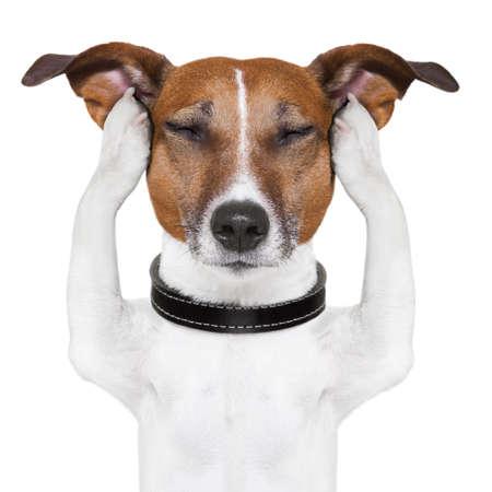 hond mediteert met gesloten ogen en oren