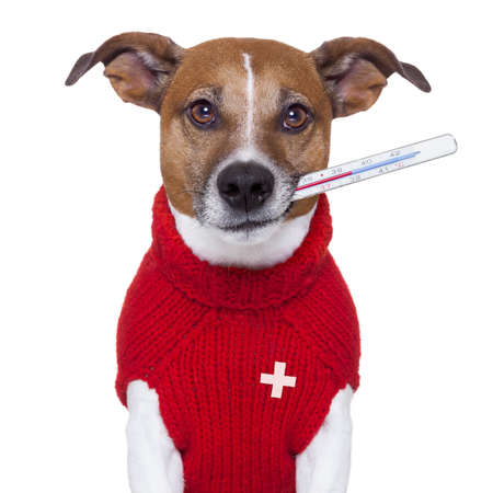 pet: sick ill cold dog  with fever Stock Photo