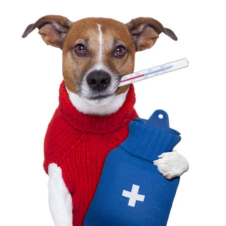 veterinary care: sick ill cold dog  with fever and hot water bottle