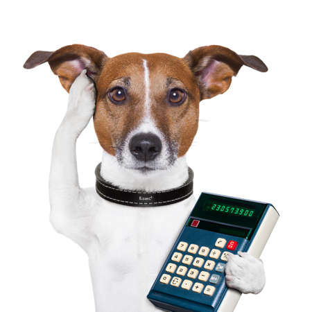 dog accountant thinking and calculating with calculator photo