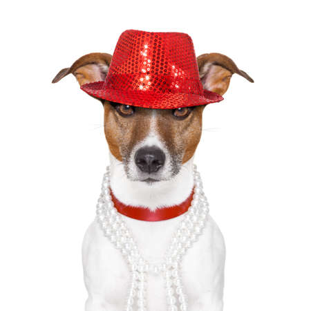 funny and crazy looking dog with fancy red hat and  big  perls collar Stock Photo