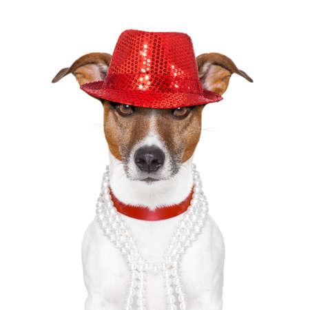 lustig und verrückt aussehenden Hund mit ausgefallenen roten Hut und großen Perlen Kragen Standard-Bild