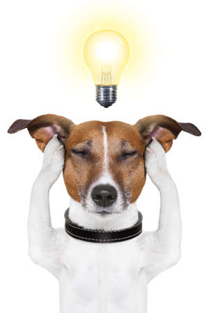 solve problem: smart dog thinking with a light bulb on top Stock Photo