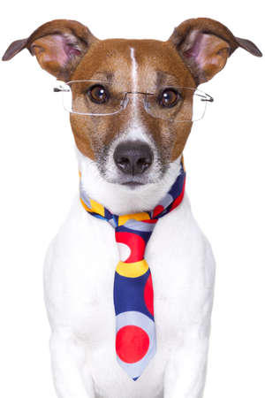 office dog wearing funny  tie and glasses