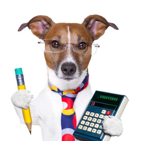 鉛筆と電卓を持つ会計士犬