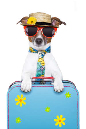 flyaway: dog on holidays with luggage ,funny tie and hat