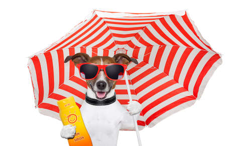 glasses in the sand: summer dog  Stock Photo