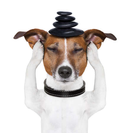 dog meditates with hot stones  on top Stock Photo - 17610561
