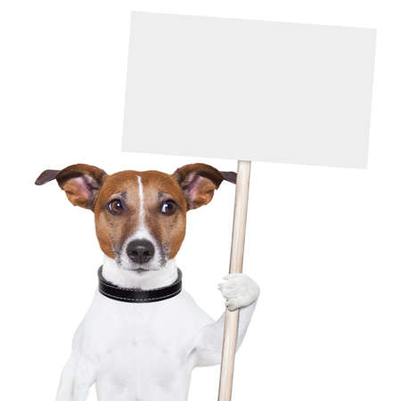placard: dog holding an empty placard and looking sideways