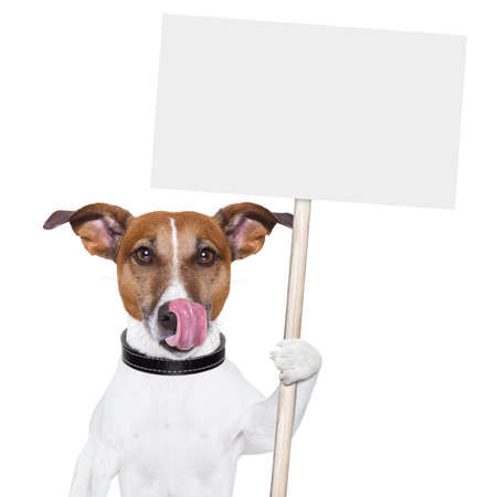dog holding an empty placard and licking photo