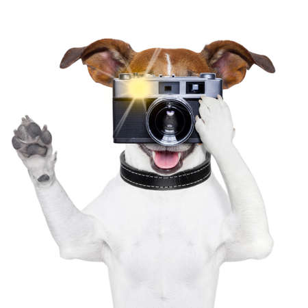 dog taking a photo with an old camera and flashing photo