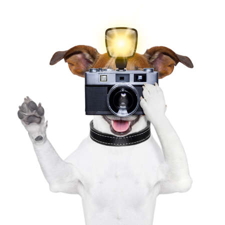 dog toy: dog taking a photo with an old camera and flashgun