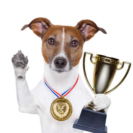 champion winning dog with a gold medal photo