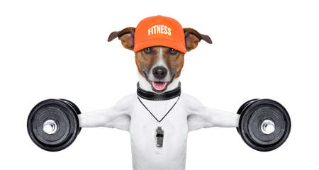 personal  trainer dog with dumbbells and a whistle photo