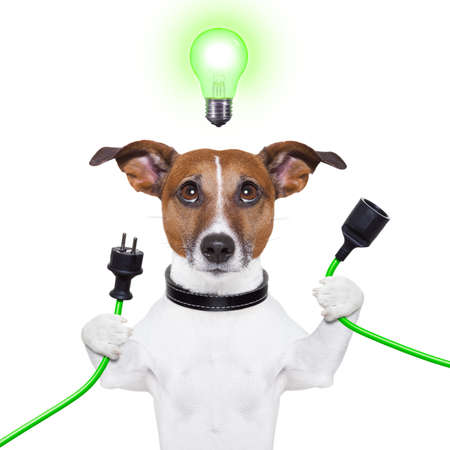 jack russell: green energy dog with a cable and a light bulb