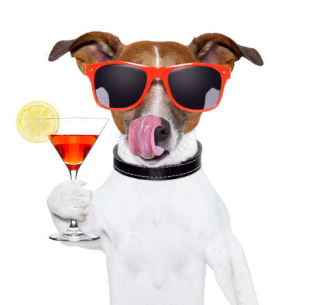 jokes: dog cooling with a martini refreshment cocktail