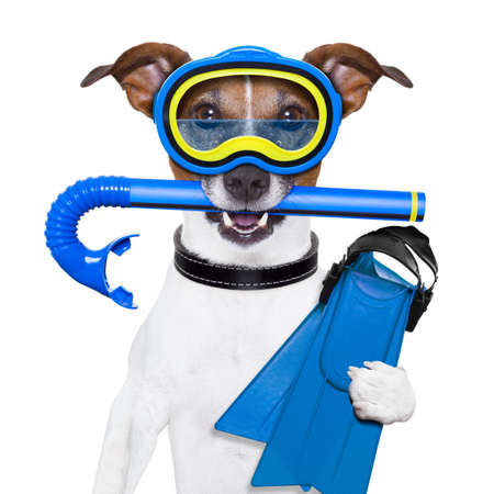 scuba goggles: scuba dog with tins snorkel and goggles