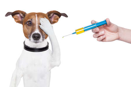 dog vaccination with a big blue Syringe Stock Photo