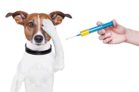 vacunacion: perro vacunaci�n con una jeringa grande azul Foto de archivo