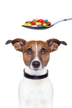 pet therapy: dog scared of a spoon full of pills
