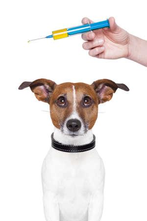 ESQUEMA DE VACUNACION: perro vacunación con una jeringa grande azul Foto de archivo
