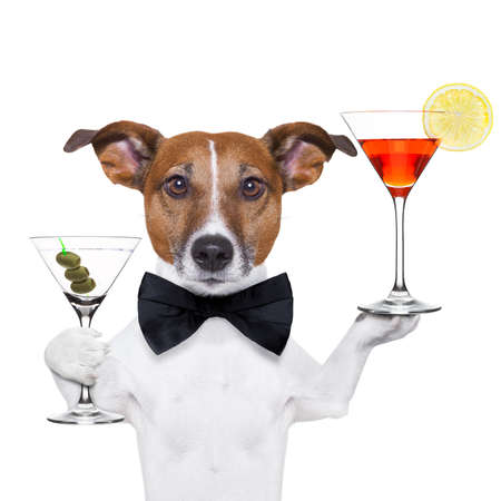 dog holding cocktails and a black tie photo
