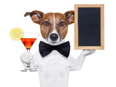 funny dog with a cocktail holding a   blank blackboard photo