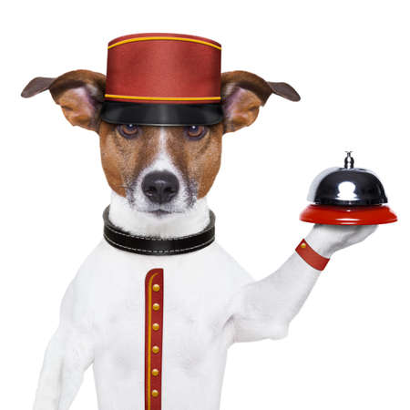 bellhop: bellboy dog holding a bell with red hat Stock Photo