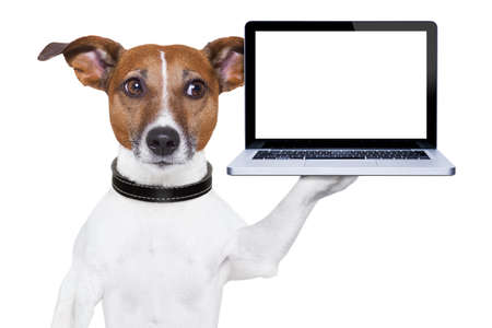 show dog: dog holding a  blank portable pc on paw Stock Photo