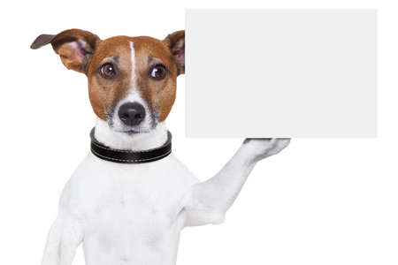 dog holding a  blank white cardboard on paw photo