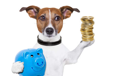 us money: dog holding a  blue piggy bank and a stack of coins
