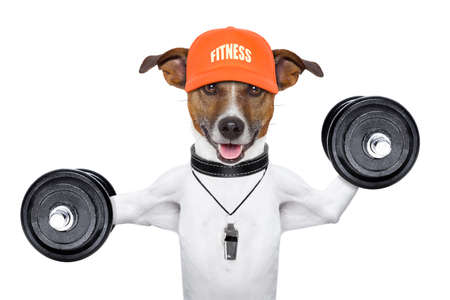 personal  trainer dog with dumbbells and a whistle Stock Photo