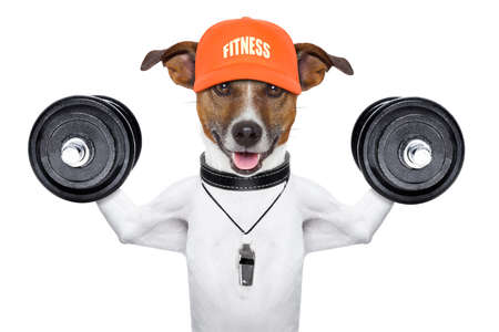 effort: personal  trainer dog with dumbbells and a whistle Stock Photo