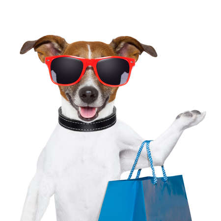 pet store: funny  dog with a big blue shopping bag and glasses