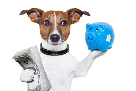 us money: dog holding a  blue piggy bank and a stack of bills Stock Photo