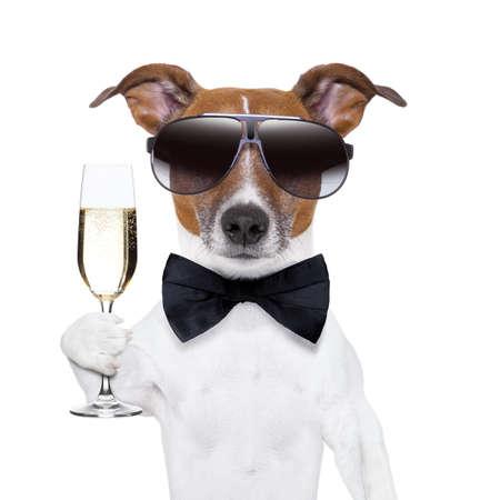 brindisi champagne: cane applausi con un bicchiere di champagne
