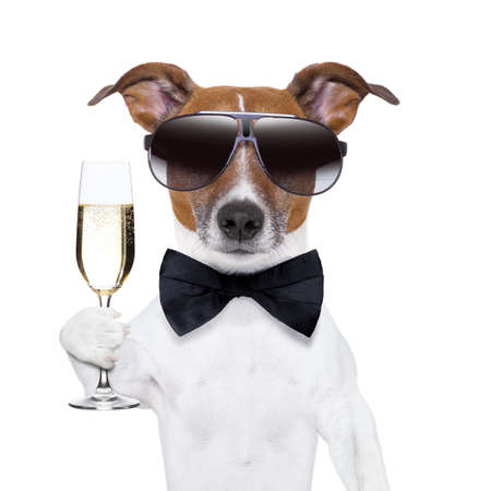 christmas champagne: cheers dog with  a glass of champagne