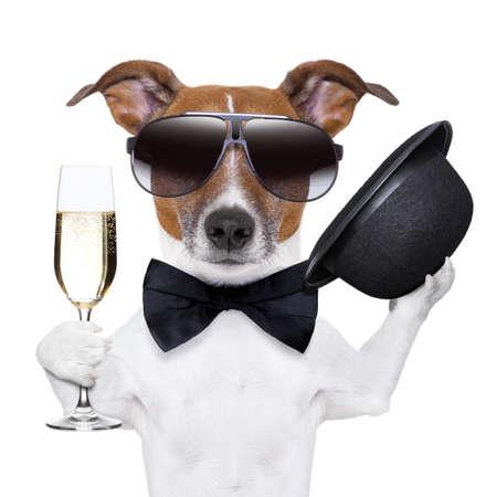 felicitaciones cumpleaÑos: aclamaciones perro con una copa de champán y un sombrero negro Foto de archivo
