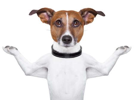 dog health: Cane Meditare cercando con le braccia alzate in su