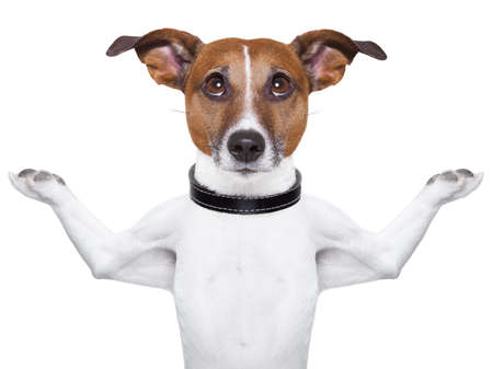 Meditating dog looking up with arms  raised up Stock Photo - 18023441