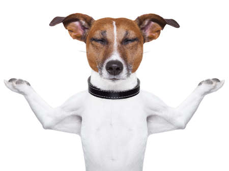 Meditating dog with arms  raised up and closed eyes photo