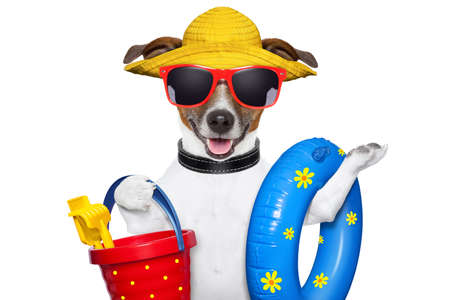 dog ready for beach with bucket swim ring and funny hat Stock Photo